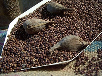 Grains Of Paradise Seeds