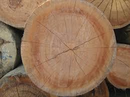 Keruing Hardwood in   MITHI ROHAR