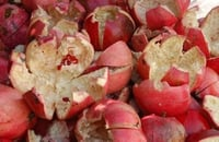Dry Pomegranate Peel and Rind