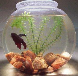 Aquarium Bowls At Best Price In Chennai Tamil Nadu Priyadharsini Aquarium