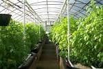 Agriculture Green House