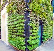 Vertical Gardening Services