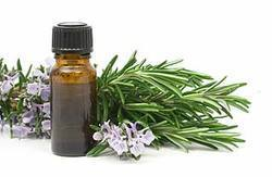 Rosemary Oil in  Akota (Vdr)