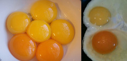 Eggs Red Yolk