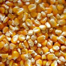 Maize (Makkai)