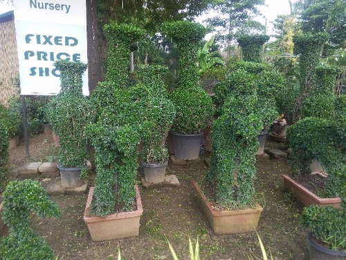 Sarb Garden Plant Pots in  New Area