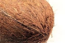 Well Matured Coconut