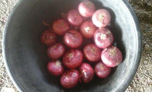 Red Onion in  Yashoda Nagar