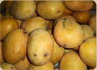 Organic Banganapalli Mangoes
