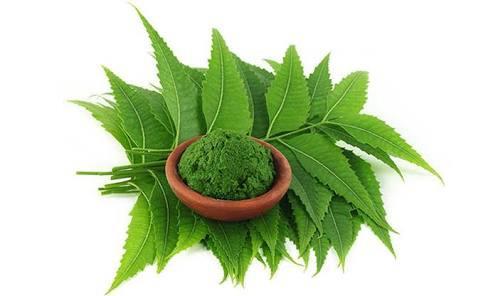 Organic Neem Powder in  J.P. Nagar