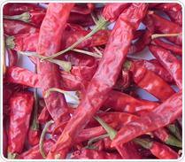 Teja Red Chillies in Rajkot, Gujarat - Karpasa Export Pvt  Ltd