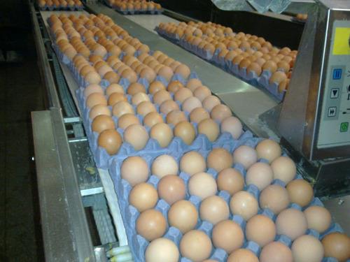 Fresh Chicken Eggs (Brown)