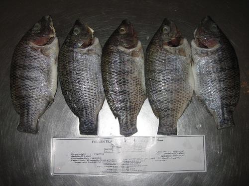 Whole Clean Tilapia Fish