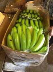 Green Cavendish Fresh Banana
