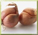 Bunch Onion