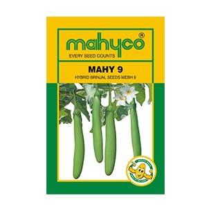 MAHY 9 (MEBH 9)