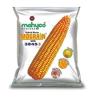 Mograin (MRM-3845 S)
