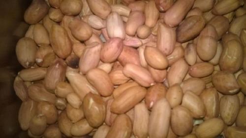 Tasty And Nutritious Bold Peanut