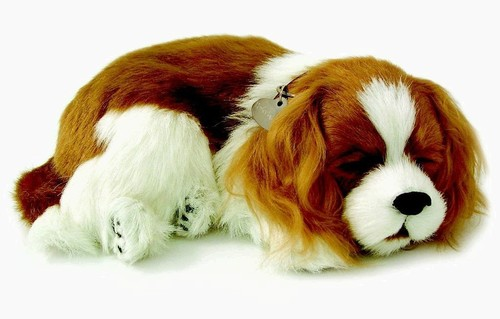 Cavalier King Charles Soft Toy