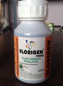 Florigen Pheno