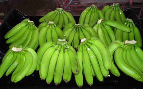 Top Quality Green Raw Banana (Cavanised)