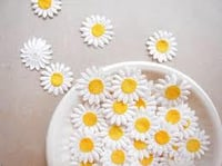Papermade Daisy Flower