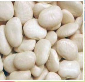 Lablab (Lima) Bean (Val)