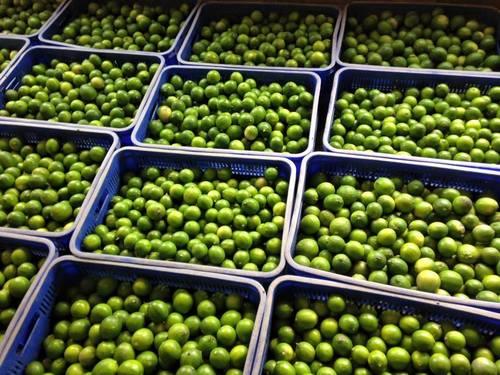 Fresh Seedless Lemons