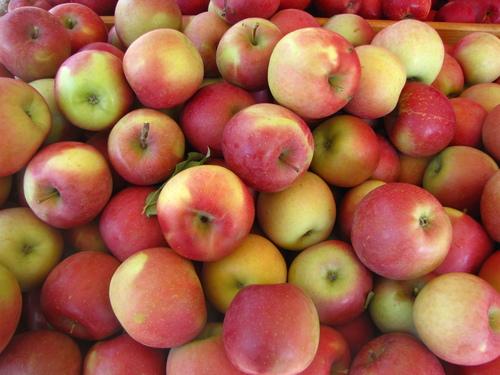 Fresh Golden Delicious Fuji And Royal Gala Apples