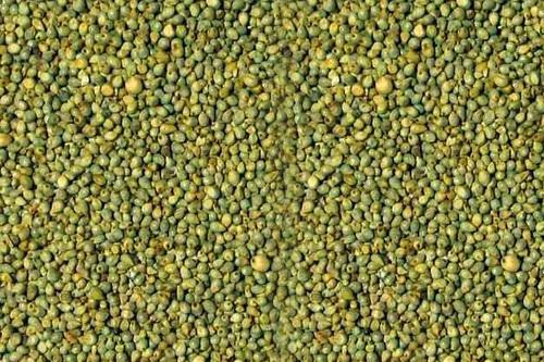 Bajra (Pearl Millet) in  Kalkaji