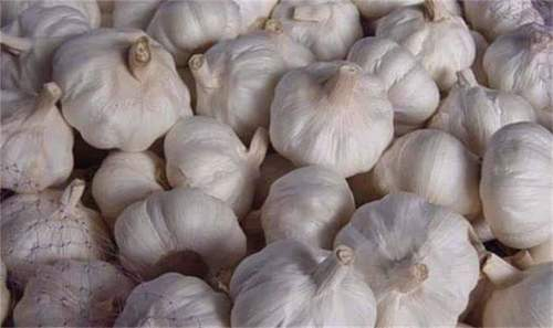Fresh Garlic in  Kanyakumari Dist.