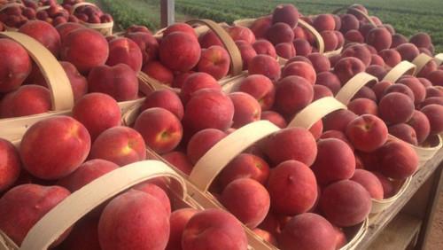 Wholesale Fresh Fuji Apple at Best Price in Nairobi, Nairobi