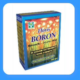 Boron in  Begumpet