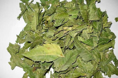 Dried Neem Leaves