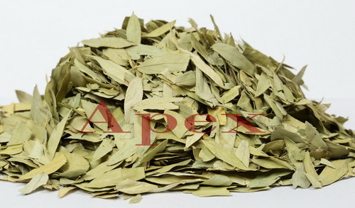 Cassia Angustifolia Leaves