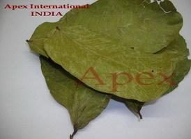 Finest Grade Cassia Alata Leaves