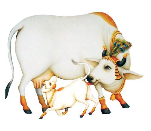 Kamdhenu Cattle Feed in   New Pachha Peth