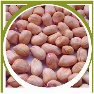 H Harsh Agri Commodities in Rajkot, Gujarat, India - Company