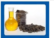 Organic Jatropha Seeds Oil