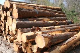 Pine Wood Logs in  Udhna