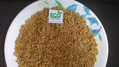 Export Quality Shihori Super Wheat