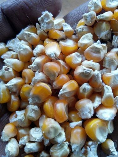 Desi Yellow Maize