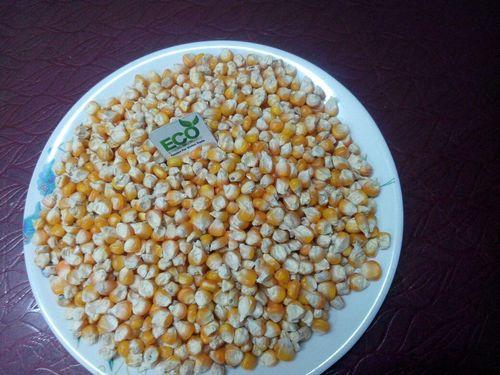 Makai (Maize)