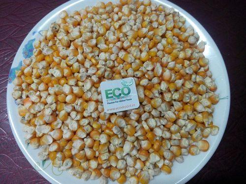 Small Yellow Maize