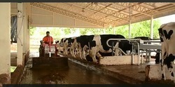 Cow Farm Shed
