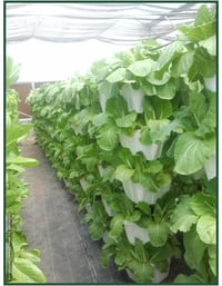 Vertical Growing System