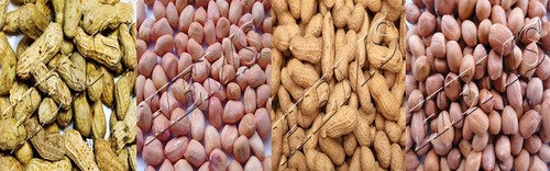 Peanut (Mungfali) Broken (%): 2%