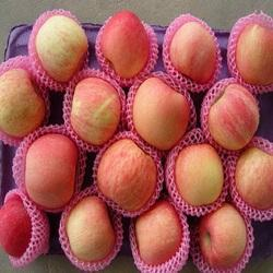 EPE Fruit Nets