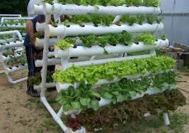 Vertical Gardening Systems