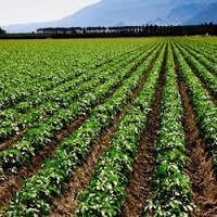 Agricultural Consultant Services